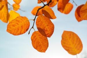 leaves-228111__340